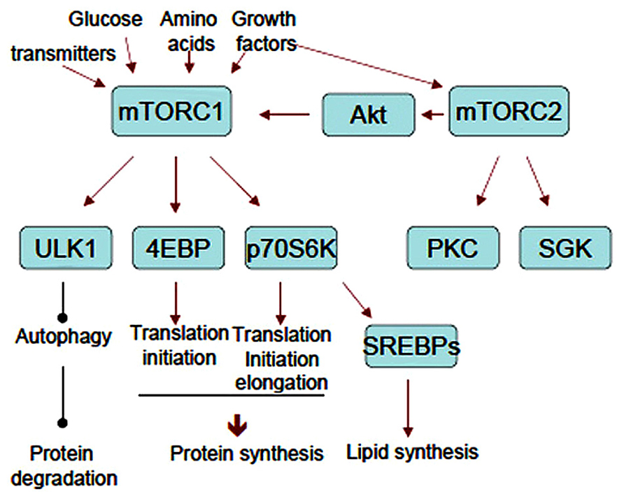 contrast anabolic and catabolic reactions