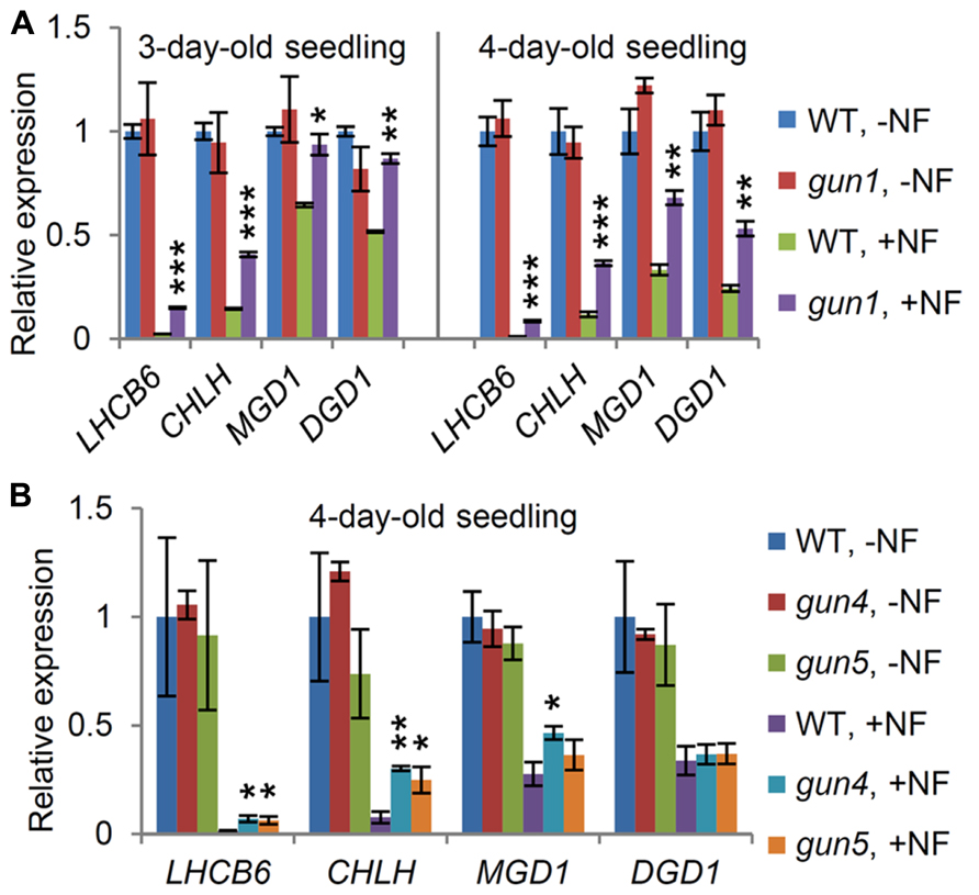 Role of galactolipid biosynthesis in coordinated