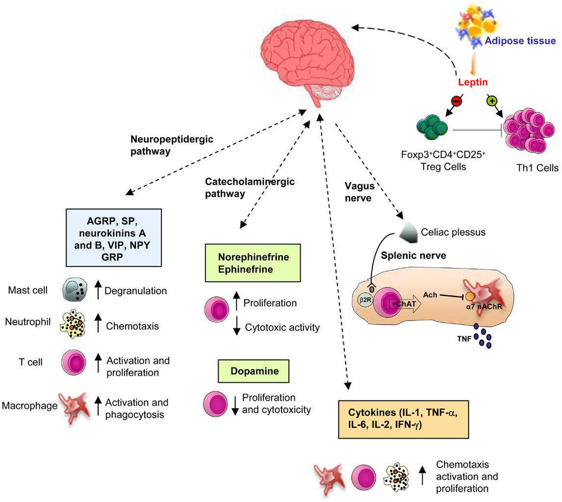 hpa axis suppression corticosteroids