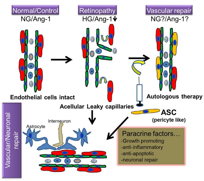 endocrinology steroid hormones