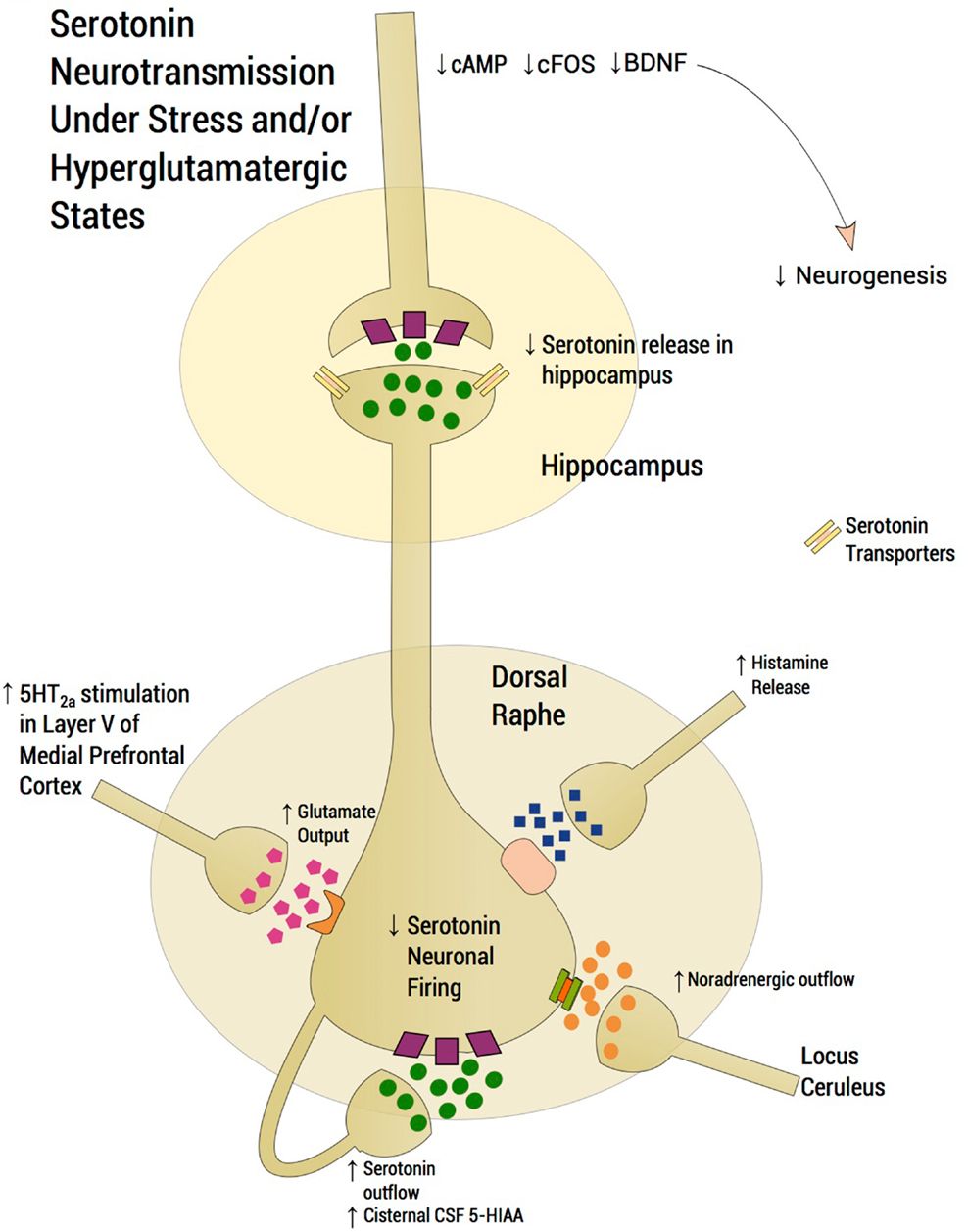 Inflammation glutamate and glia in depression a literature review