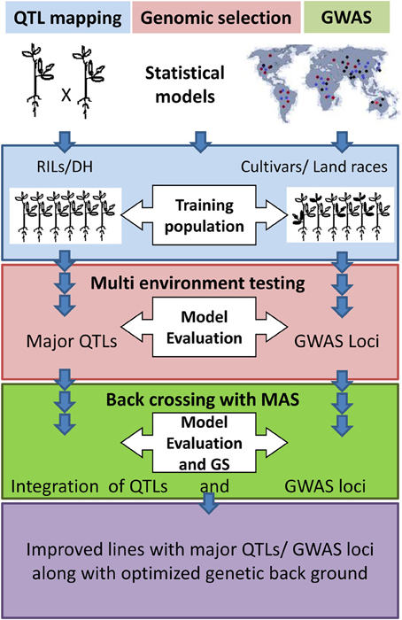 a study of gene mapping using Jitendra kumar at indian institute of pulses research jitendra kumar  an  outline of genetic mapping of genes/qtl in plants an outline of.