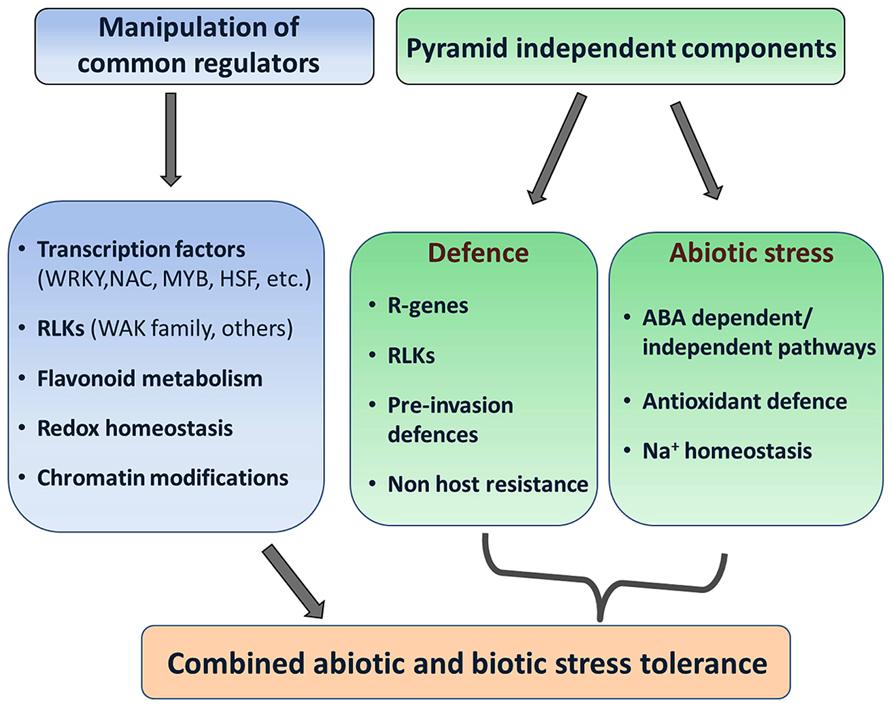 frontiers enhancing crop resilience  combined abiotic  biotic stress