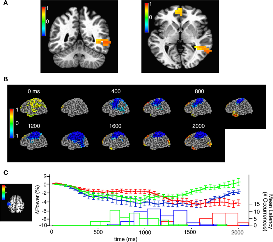 Frontiers | Functional Brain Network Characterization and ...