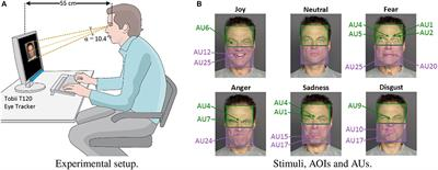 Frontiers gaze behavior consistency among older and for Studi mataro