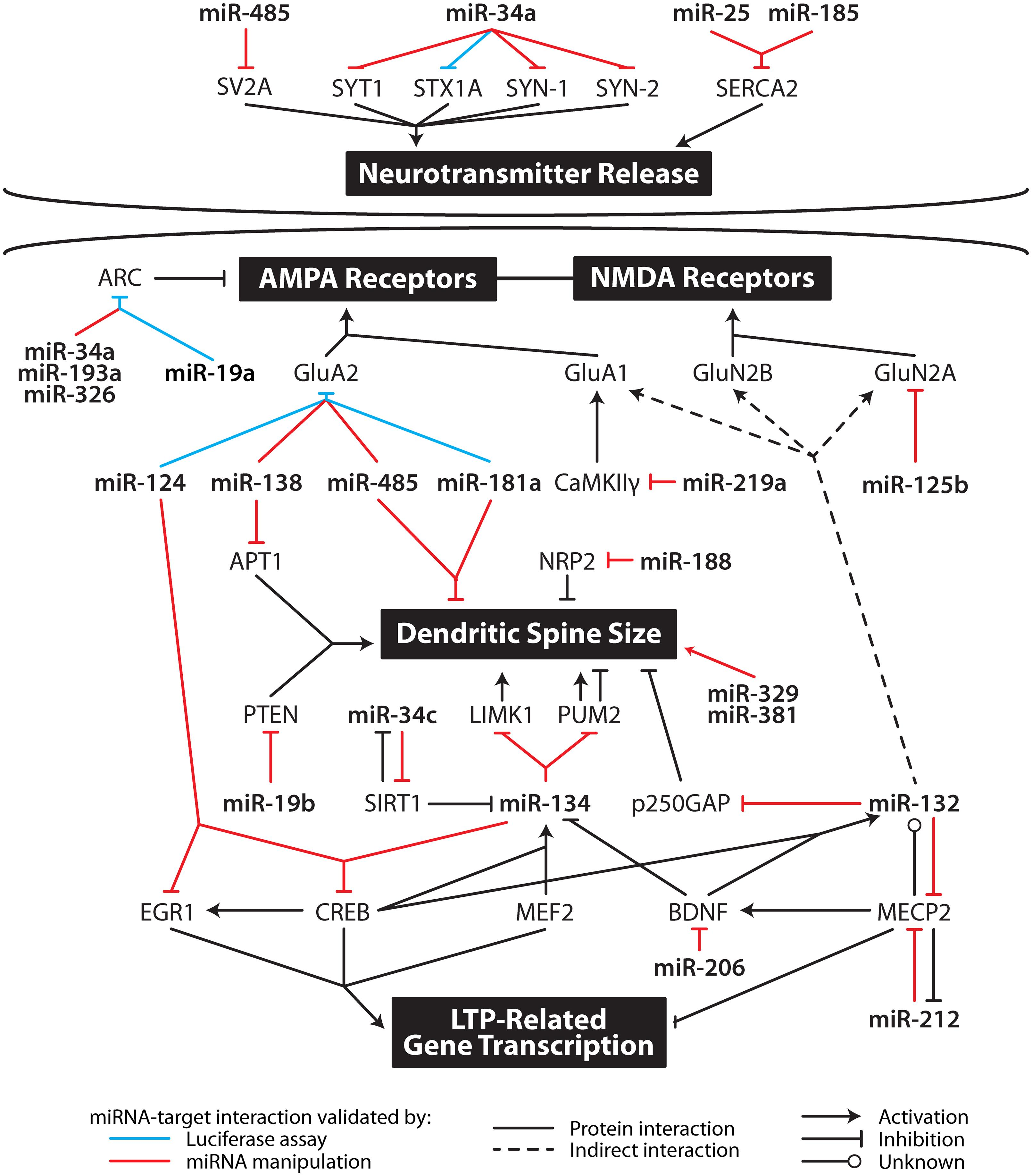 Synaptic Plasticity Gene Expression Fnmol G