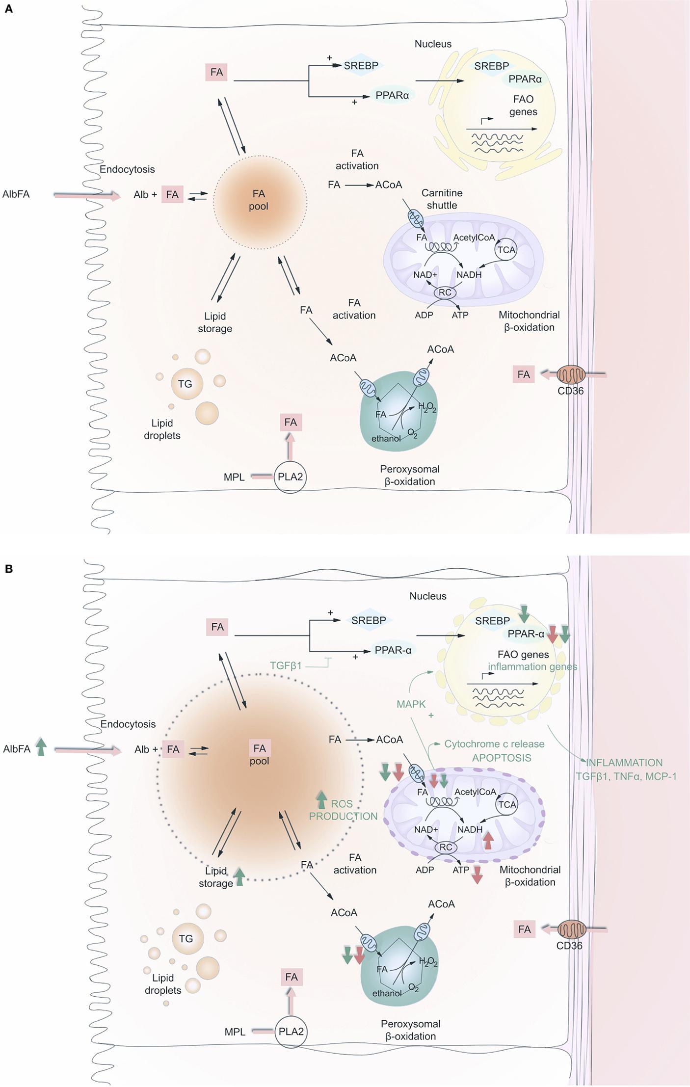 anabolic and catabolic processes