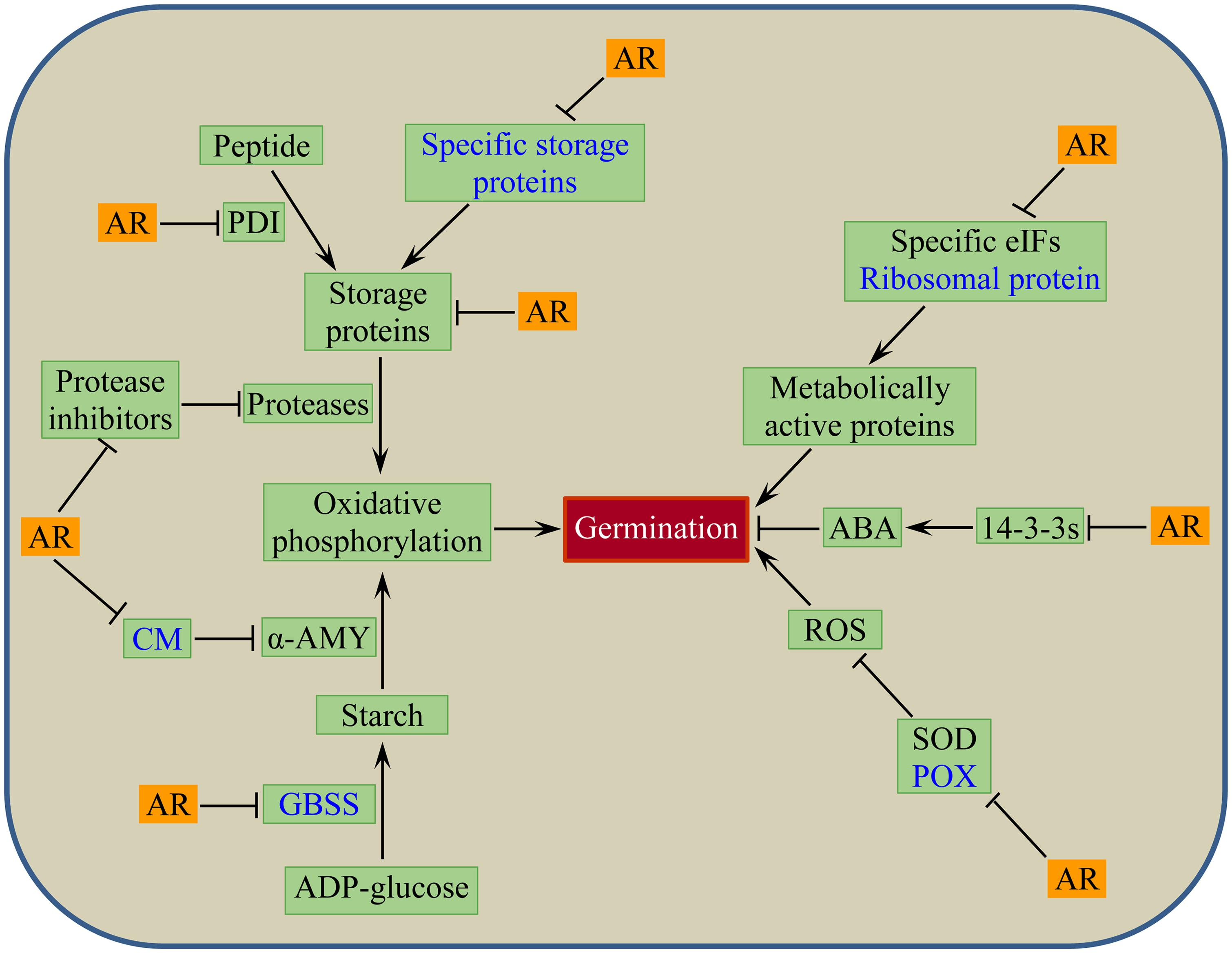 Frontiers Functional Genomics Of Seed Dormancy In Wheat Advances Germination Diagram It Works From