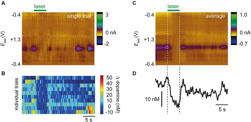 Frontiers | Optical suppression of drug-evoked phasic dopamine
