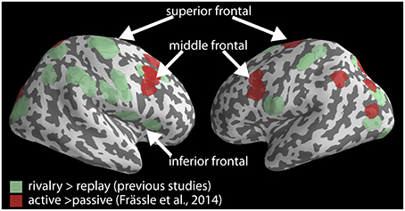 the role of the frontal lobes essay