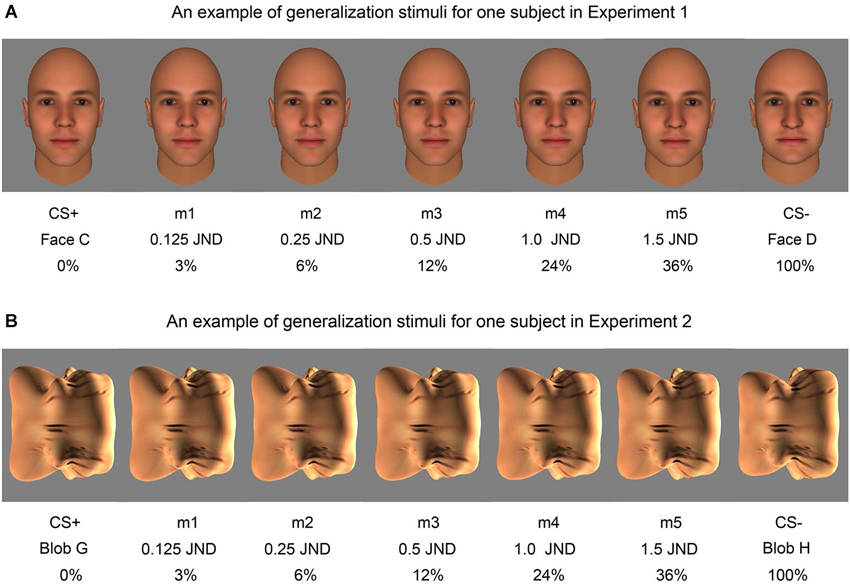 Maximally discriminative facial