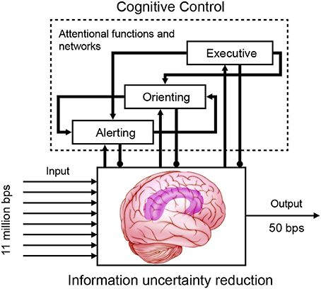 theory of mind and executive function Our main points are that executive function (self control) relates to the development of a theory of mind (tom), in particular around the ages of three to five years, and that a strong contender.