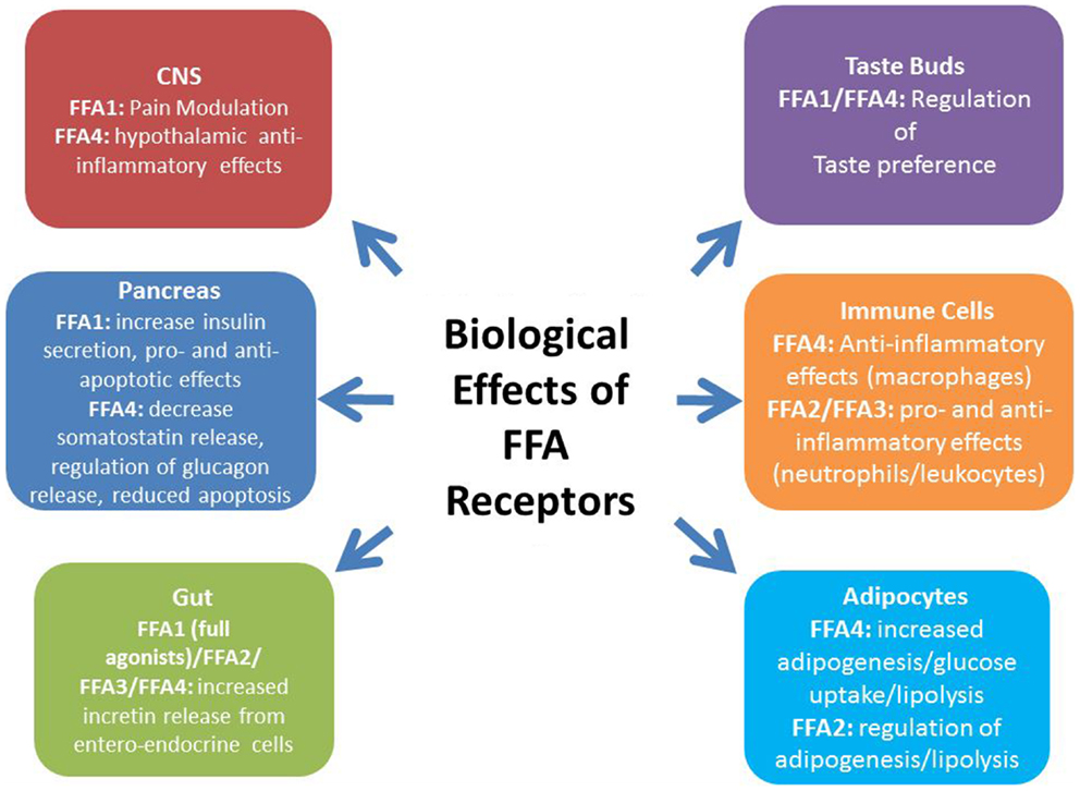 Frontiers Treatment Of Type 2 Diabetes By Free Fatty Acid Receptor