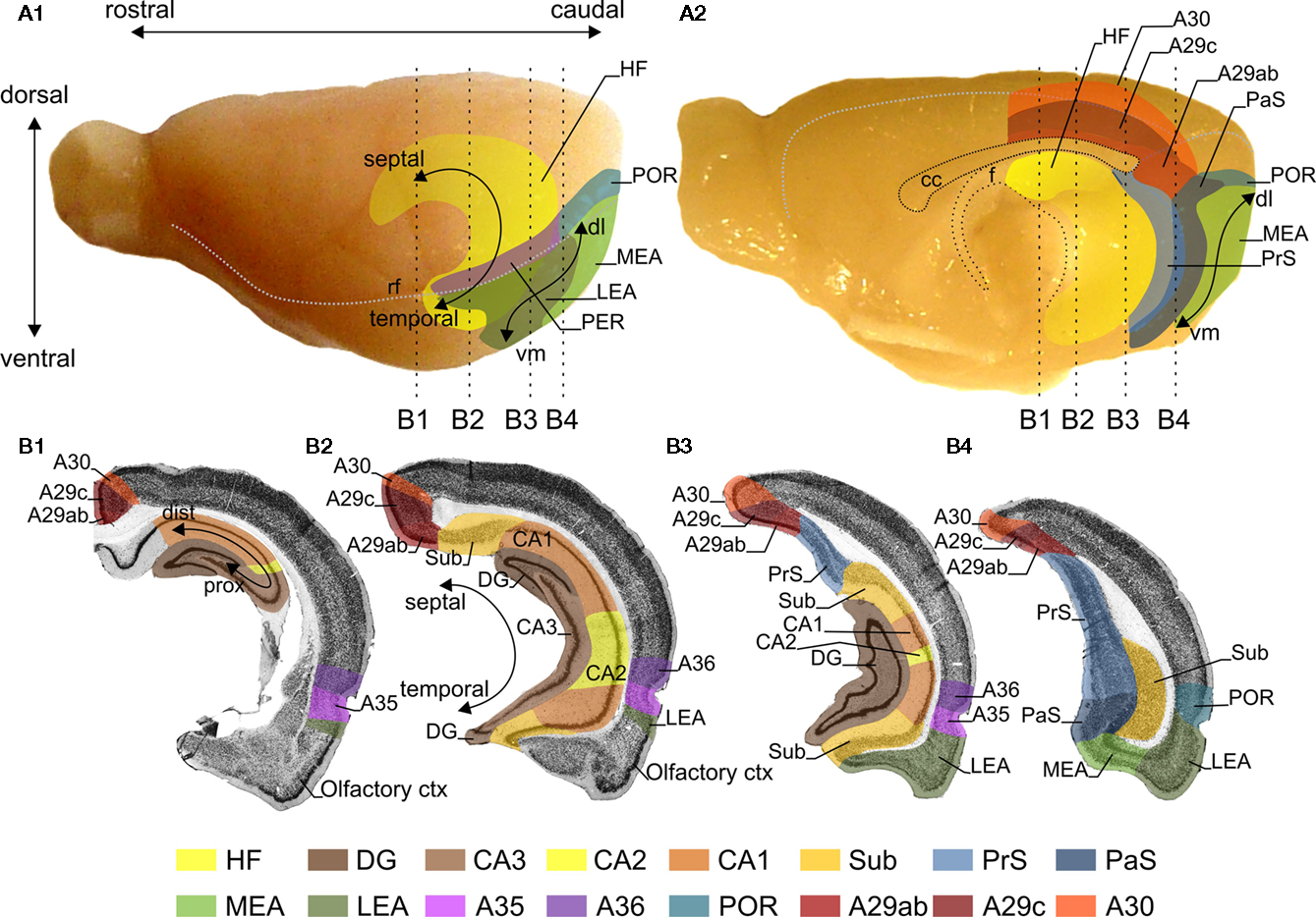 Frontiers The Retrosplenial Cortex Intrinsic Connectivity And