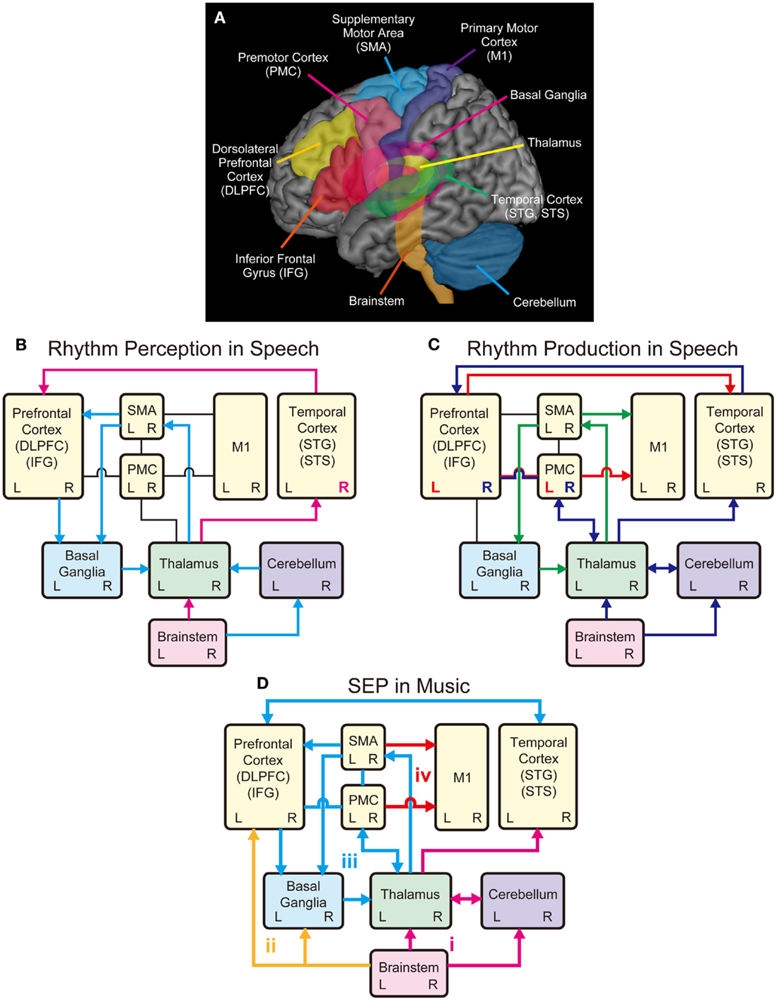 Frontiers The Role Of Rhythm In Speech And Language Rehabilitation Recognition Circuit