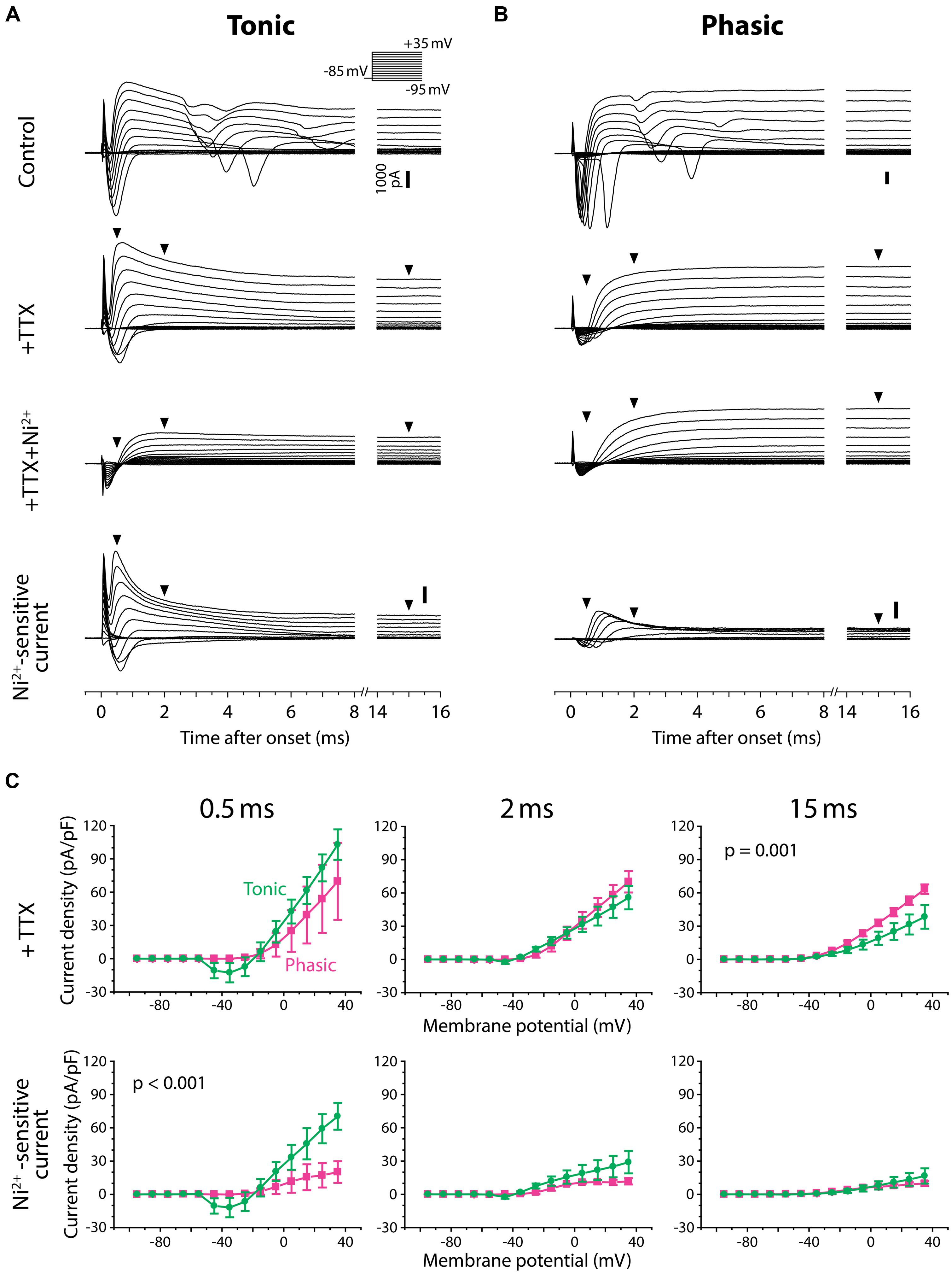 Frontiers A Fast Bk Type Kca Current Acts As Postsynaptic Longinterval Pulse Generator Circuit Diagram