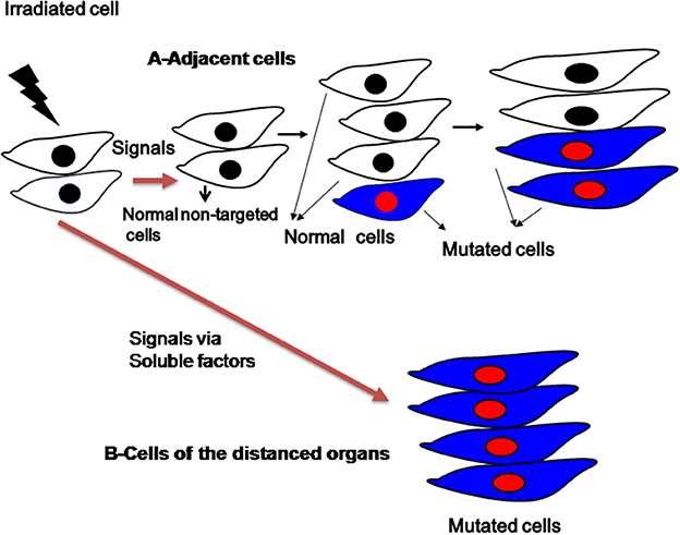 Frontiers | Biological response of cancer cells to radiation