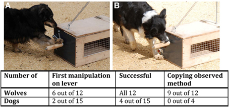Frontiers | Tracking the evolutionary origins of dog-human