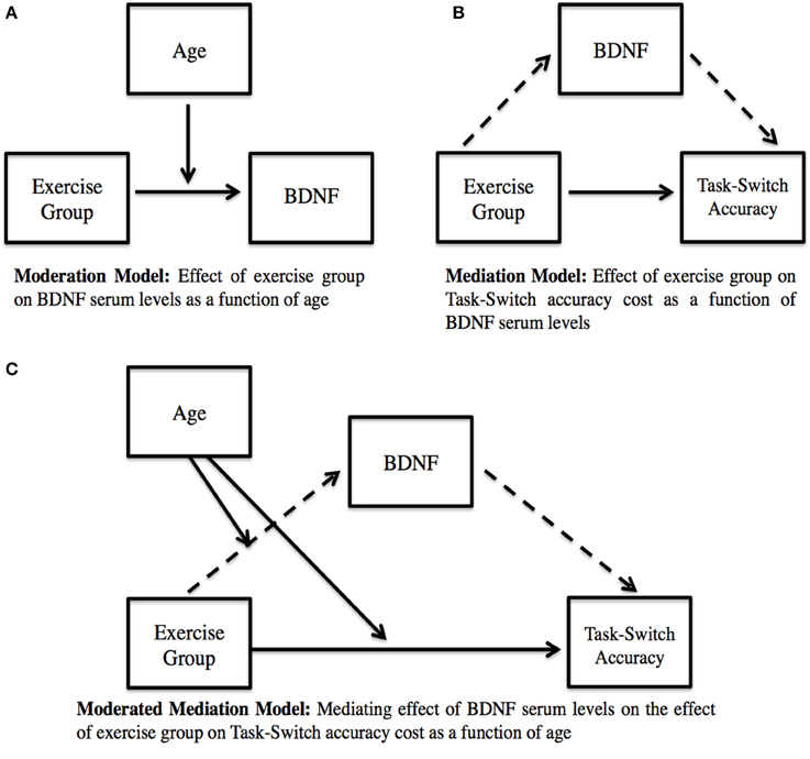 Frontiers | BDNF mediates improvements in executive function