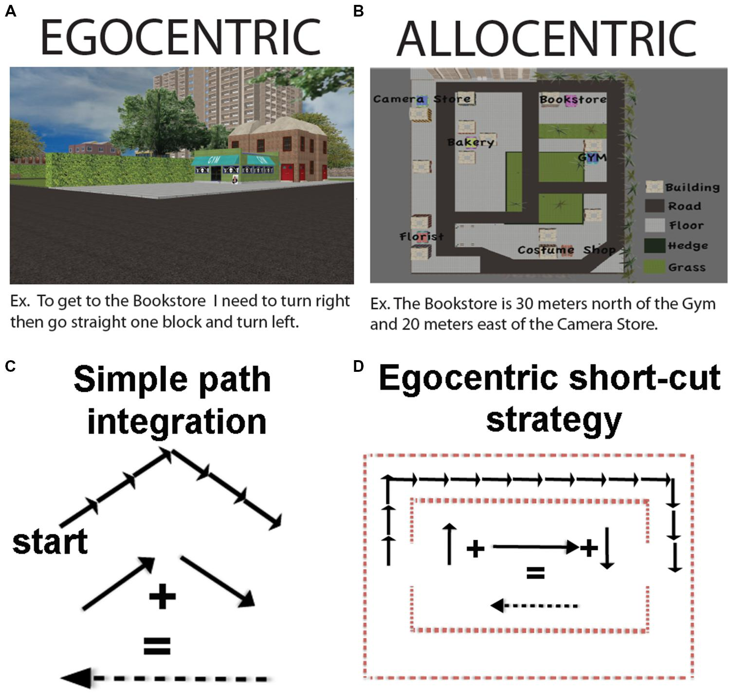 Frontiers A Critical Review Of The Allocentric Spatial