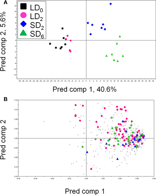 Frontiers Metabolite Signature During Short Day Induced Growth