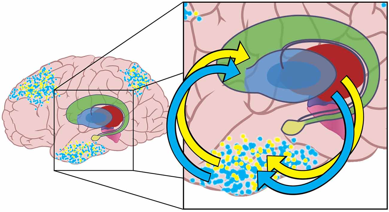 Frontiers | The basal ganglia select the expected sensory input used ...