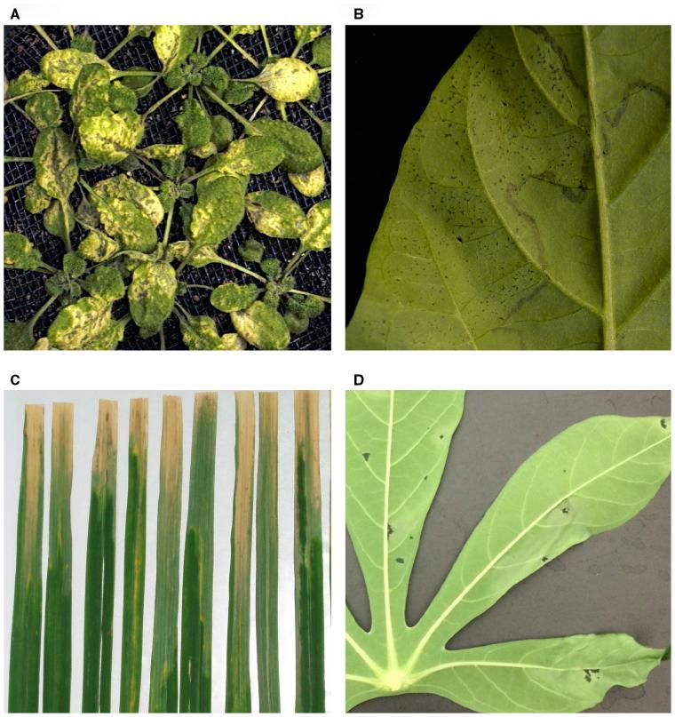 PLANT DISEASE ASSESSMENT EBOOK