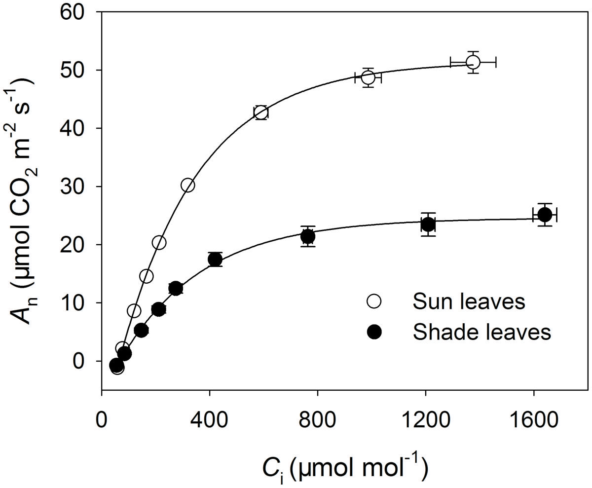 Frontiers | Sun leaves up-regulate the photorespiratory