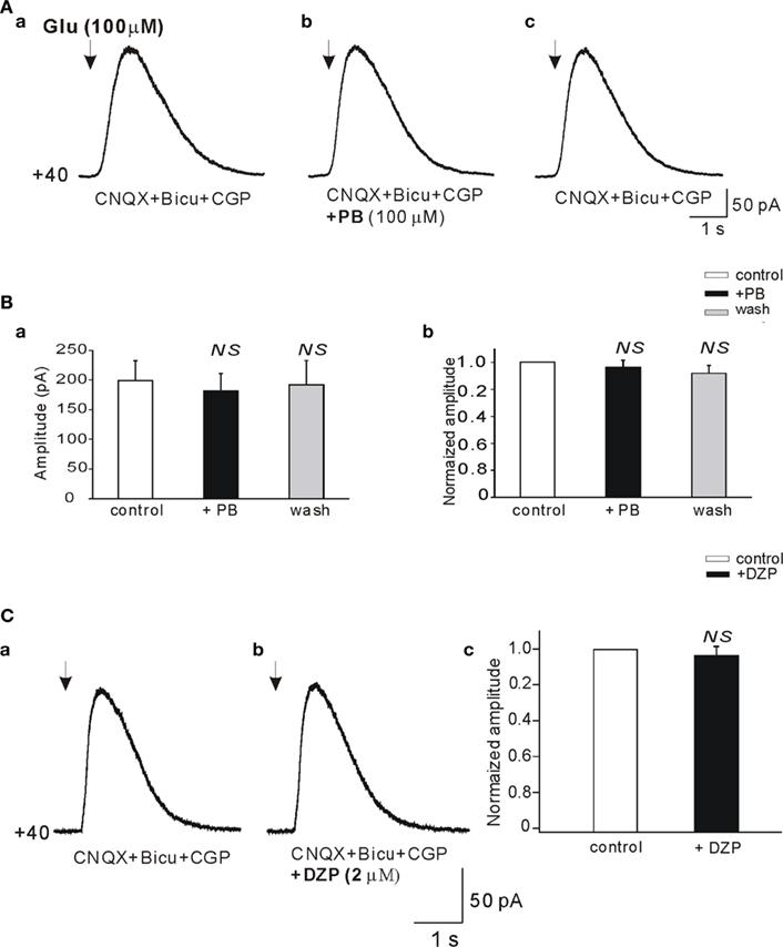 Glutamate receptor ionotropic, kainate 1