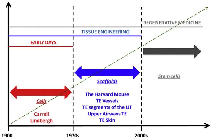 Frontiers   Tissue Engineering and Regenerative Medicine