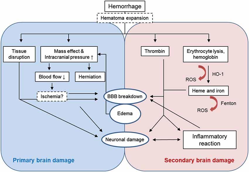 pathophysiology of hemorrhagic stroke pdf