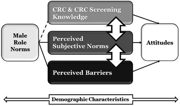 characteristics of norms