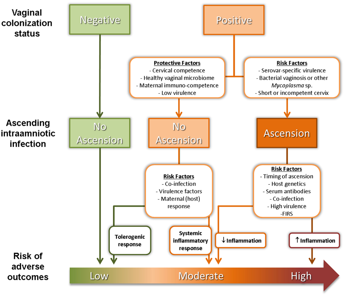 Frontiers | The Maternal Serological Response to