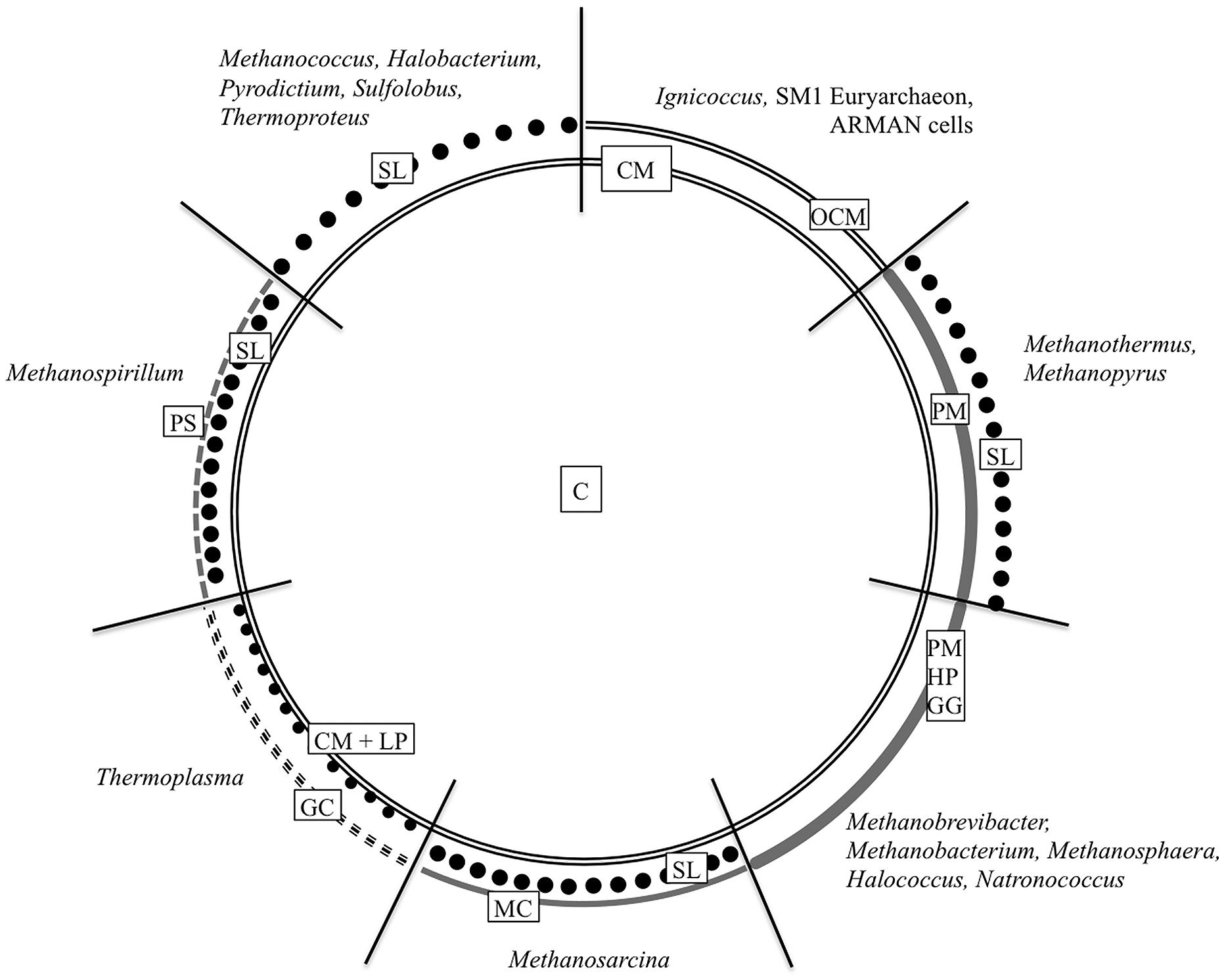 Frontiers S Layer And Cytoplasmic Membrane Exceptions From The Diagram Of Prokaryotic Cell By Mariana Ruiz