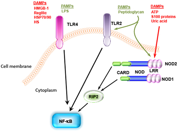 DPP 0042 moreover How Do Tlr1 Tlr2 Activate The Myd88 Dependent Pathway furthermore Labpicture2014 likewise 5 Breast Cancer Facts further Grants fr. on immunology