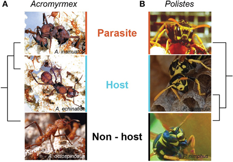 Frontiers Social Parasitism And The Molecular Basis Of Phenotypic