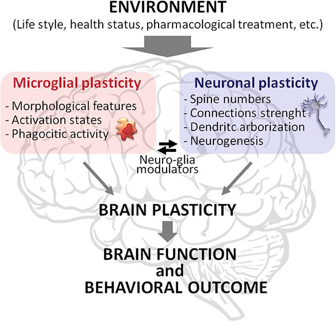 neuroconstructivist view