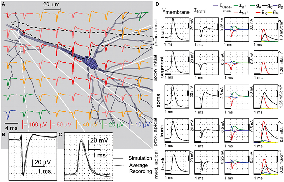 fnins 08 00423 g014 frontiers revealing neuronal function through microelectrode  at n-0.co