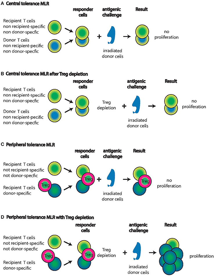 mechanism of graft rejection pdf