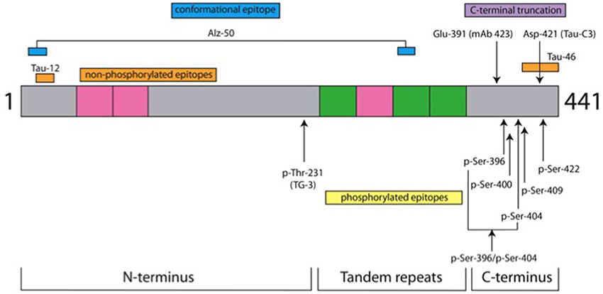 what is the relationship between exons and protein domains