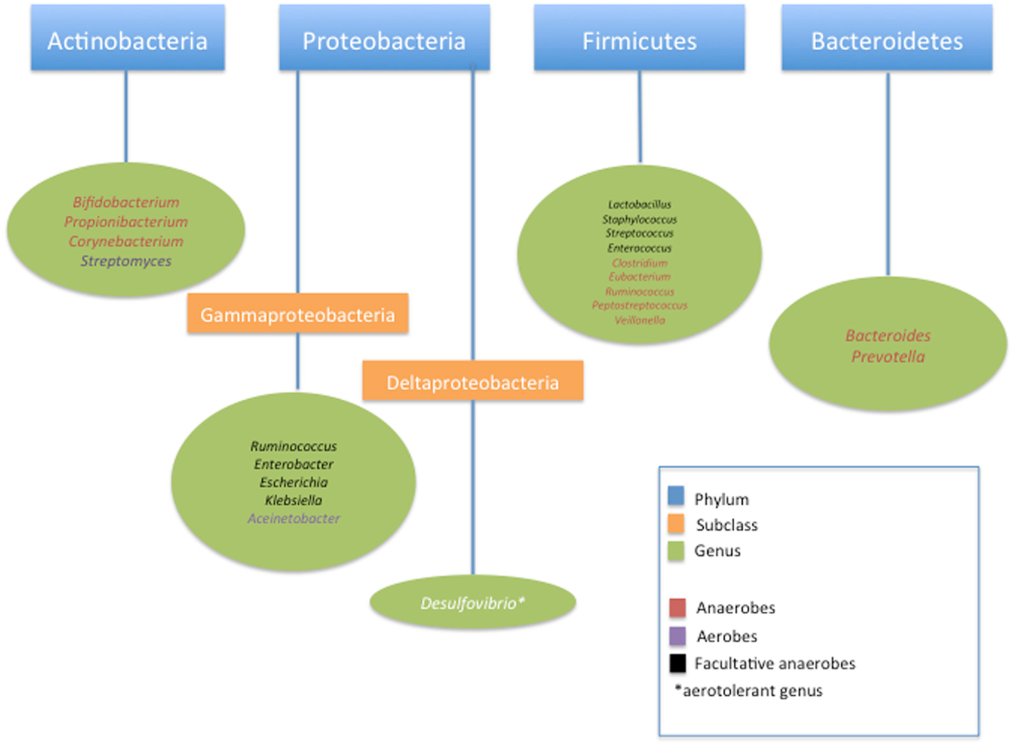 Frontiers | The Human Neonatal Gut Microbiome: A Brief