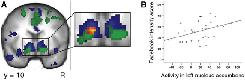 Figure 2 - Neuroimaging (fMRI) results demonstrating a relationship between the nucleus accumbens response to discovering one has a good reputation and Facebook use.