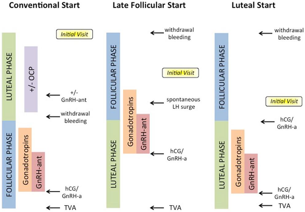 Hcg Protocol Phase  Food List