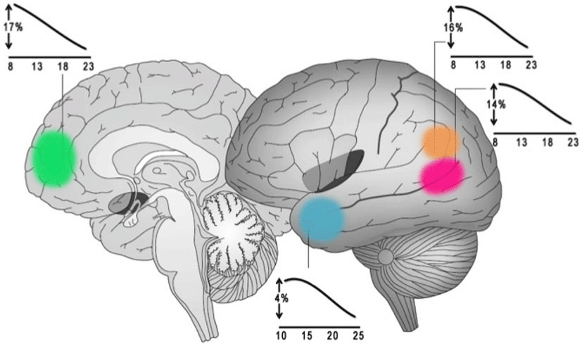 Figure 4 - Social brain structural changes.