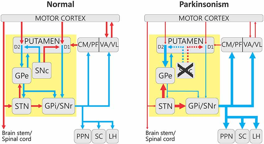 Frontiers Alterations In Neuronal Activity In Basal Ganglia
