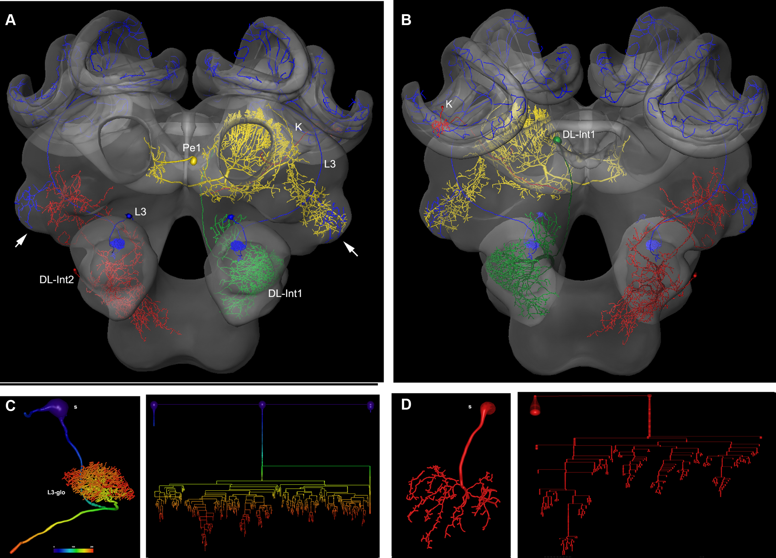 Frontiers The Digital Bee Brain Integrating And Managing Neurons