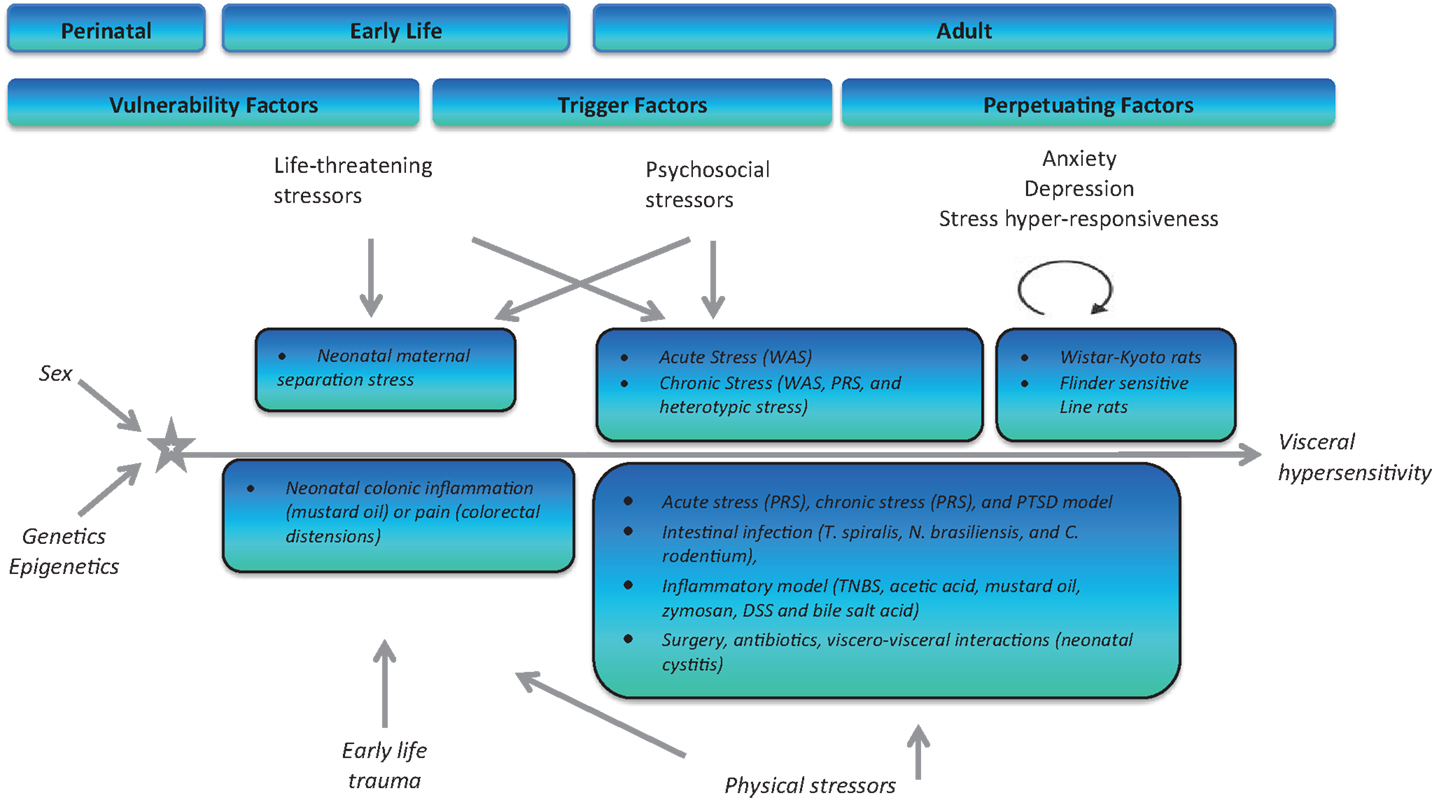 a research on modified stressor vulnerability model of stress related drinking Developing a better understanding of how workplace stress may affect ems personnel is a key step in the process of increasing awareness of the impact of work-related stress and stress-related impairment objective this paper demonstrates that for those in ems, exposure to several types of workplace stressors is linked to stress reactions.