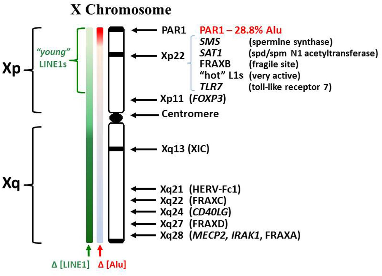 Y chromosome dating