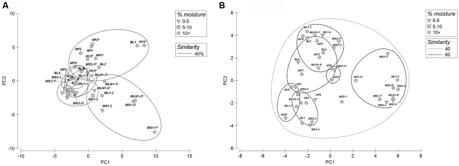 Frontiers | Microbial community composition of transiently