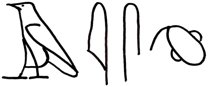 """איור 2 - למעלה: המילה """"מוח"""" כתובה בכתב חרטומים."""